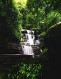 Cascada ancha pacífica de la cascada en bosque tropical sombrío denso foto de archivo