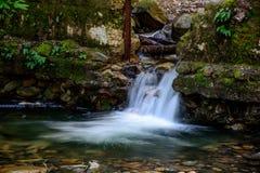Cascada atractiva y verde Moss Stone In Forest Foto de archivo