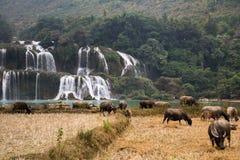 Cascada Bondjok Vietnam del norte fotografía de archivo libre de regalías