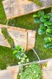 Cascada con la caja de madera, diseño que cultiva un huerto. Fotografía de archivo