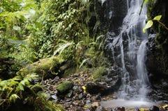 Cascada Costa Rica Puerto Viejo Limon Fotografía de archivo
