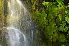 Cascada cubierta de musgo Fotos de archivo libres de regalías