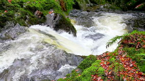 Cascada de conexión en cascada del agua almacen de metraje de vídeo