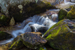Cascada de conexión en cascada pacífica de la montaña Imagenes de archivo