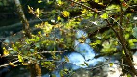 Cascada de Green River de la naturaleza almacen de metraje de vídeo