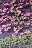 Cascada de hojas Imagen de archivo libre de regalías
