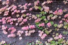 Cascada de hojas Foto de archivo libre de regalías