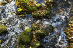 Cascada de la cala de la montaña con el musgo verde en árboles caidos Foto de archivo libre de regalías