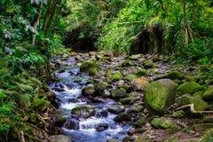 Cascada de la cala en la selva tropical de la isla de Oahu, Hawaii fotografía de archivo libre de regalías