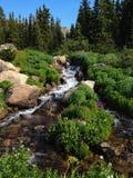 Cascada de la montaña con los Wildflowers imagenes de archivo