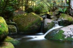 Cascada de la selva tropical foto de archivo