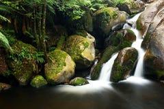 Cascada de la selva tropical