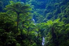 Cascada de Madakaripura, Java Oriental, Indonesia fotos de archivo