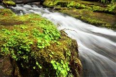 Cascada de Oregon imagen de archivo libre de regalías