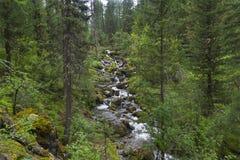 Cascada de pequeñas cascadas en el río de la montaña Altai, Rusia Imagen de archivo libre de regalías