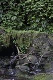 Cascada de Tegenungan Imagenes de archivo