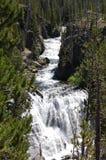 Cascada de Yellowstone enmarcada por el primer de los árboles Foto de archivo libre de regalías