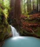 Cascada del bosque de la secoya Imagenes de archivo
