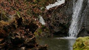 Cascada del bosque en invierno metrajes