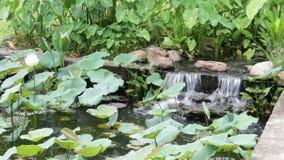 Cascada del jardín en jardín oriental ajardinado metrajes