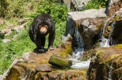 Cascada del oso de Sun Fotografía de archivo libre de regalías