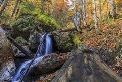 Cascada del otoño en el bosque foto de archivo libre de regalías