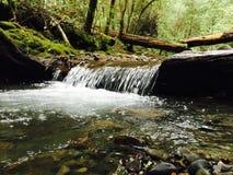 Cascada del paisaje del bosque Fotos de archivo libres de regalías