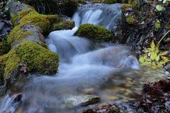 Cascada del río de la montaña en bosque de las montañas de Cárpatos Imagen de archivo libre de regalías
