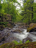 Cascada del río del bosque Imagen de archivo libre de regalías