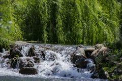 Cascada del río en el bosque foto de archivo libre de regalías