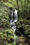 Cascada en bosque Imagenes de archivo