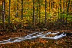Cascada en bosque del otoño fotos de archivo libres de regalías