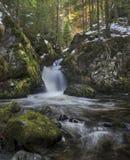 Cascada en bosque negro Foto de archivo libre de regalías