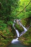 Cascada en bosque profundo Fotografía de archivo