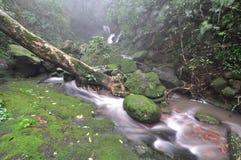 Cascada en bosque profundo Imagen de archivo