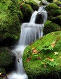 Cascada en el bosque Fotos de archivo libres de regalías