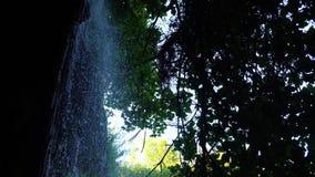 Cascada en el bosque metrajes