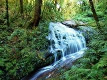 Cascada en el bosque Foto de archivo libre de regalías