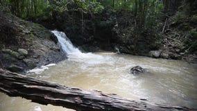 Cascada en el bosque de bambú almacen de metraje de vídeo