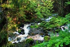 Cascada en el bosque negro en Alemania Fotos de archivo