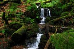 Cascada en el bosque negro en Alemania Foto de archivo libre de regalías