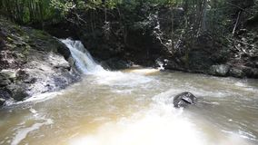 Cascada en el bosque tropical metrajes