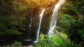 Cascada en el paraíso tropical (lazo de HD) almacen de metraje de vídeo