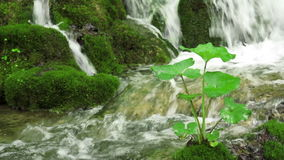 Cascada en el parque nacional de Plitvice almacen de metraje de vídeo