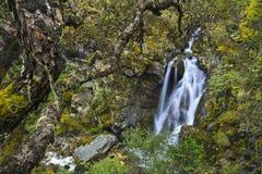 Cascada en la montaña Fotografía de archivo libre de regalías