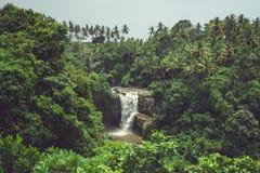 Cascada en la selva Imágenes de archivo libres de regalías