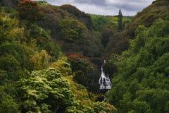 Cascada en la selva de Hawaii Fotos de archivo libres de regalías