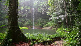 Cascada en la selva tropical de Borneo en día lluvioso almacen de metraje de vídeo