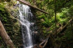 Cascada en parque de estado grande del lavabo fotos de archivo