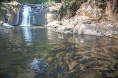 Cascada en parque nacional Fotos de archivo